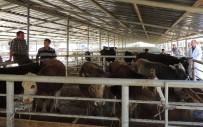 KORDON - Şap Krizinin Sona Erdiği Bolu'da Hayvan Pazarları Tekrar Açıldı