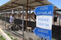 DOKTOR RAPORU - Sokak Hayvanlarına Belediye Şefkati