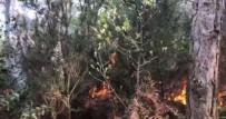 KANLıCA - Aydos Ormanlarında Çıkan Yangın Hakkında Açıklama