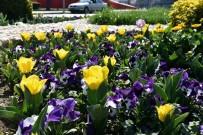 LALE SOĞANI - Bahar Çiçekleri Alaşehir'e Renk Kattı