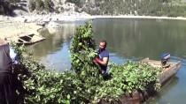 AHMET KARA - Berke Barajı'nda Kayıkla Defne Üretimi