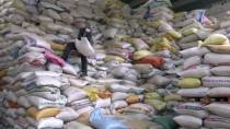 HAŞHAŞ - Hindistan'a rekor haşhaş ihracatı
