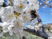 Mudanya'da Arı Yetiştiriciliği Kursu