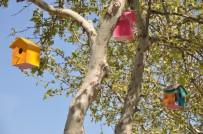 SOMA - Somalı Öğrencilerden 'Kuş Evi' Projesi