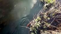 Ağrı Dağı Milli Parkı'ndaki Su Maymunlarına Yoğun İlgi