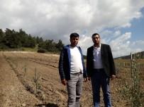 Ahmetli'nin Fidanları Kontrol Altında