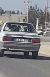 Otomobilin Arka Koltuğundaki İneği Görenler Şaşkına Döndü