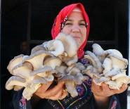 İSTIRIDYE - İlkokul Mezunuyken, Dünyaya Açılmayı Hedefleyen İş Kadını Oldu