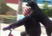 Bisiklet Üzerinde Köpekli Yolculuk Renkli Görüntüler Oluşturdu