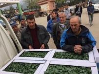 Bursa'da Çiftçilere 150 Bin Kabak Fidesi Dağıtıldı