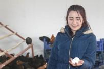 Öğrenciler Okulda Kurulan Kümeste Yumurta Üretiyor