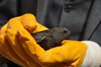 Tokat'ta Ebabil kuşu görüldü