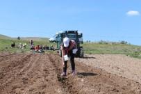 BITIRME PROJESI - Köy Hayatını Üreterek Ve Yaşayarak Öğrendiler