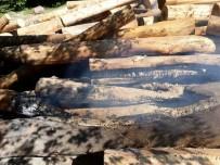 Sinop'ta Ormandaki Tomruklar Yakıldı