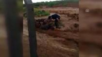 MUSTAFA YıLDıZ - Yağışı Görüntülerken Sele Kapıldı