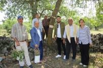 MEHMET KARA - Yunusemre'de 80 Bin Ağaca Aşılama