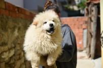GÜMRÜK KAPISI - Gümrük Kaçağı Yavru Köpekler İhaleye Çıkarıldı