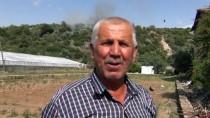ZEYTINLIK - Muğla'da Zeytinlik Yangını