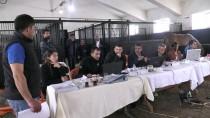 TARıM İŞLETMELERI GENEL MÜDÜRLÜĞÜ - Şampiyon Adayı Taylar Görücüye Çıkacak