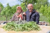 KİMYASAL GÜBRE - Talas İlçesinde Adaçayı Hasadı Başladı