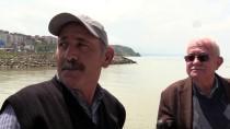 PELIKAN - Alaplı Çayı'nın Yeni Konukları Pelikanlara Yoğun İlgi