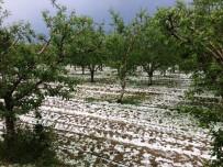 DOLU YAĞIŞI - Antalya'da Meyve Üreticisini Dolu İkinci Kez Vurdu