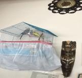 SOSYAL PAYLAŞIM - Girdikleri Evdeki Kuşu Dolaptaki Peynir Bile Çaldılar