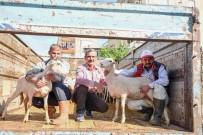 Gördesli Çiftçilere Küçükbaş Hayvan Desteği