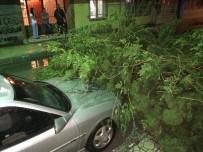DOLU YAĞIŞI - Hatay'da Şiddetli Yağış Ağaçları Devirdi
