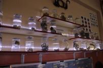 KURBAĞA - Lise Öğrencileri Üniversitelerde Bulunmayan Özellikte Biyoloji Müzesi Kurdu