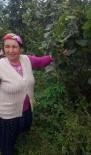 Ordu'daki Kayıp Kadının Cesedine Ulaşıldı