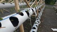 Su Borusunda Çilek Yetiştiriyor