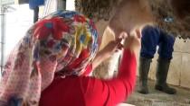 Devletten Aldığı Destekle Süt Çiftliği Kuran 6 Çocuk Annesinin Başarı Hikayesi