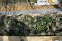 ÖZLEM YILMAZ - Düzce'de Çam Kese Böceği Zararlısına Karşı Mücadele Devam Ediyor