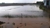 CEYLANPINAR - Sel Tarım Arazilerini De Vurdu