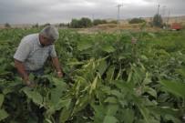 SEBZE ÜRETİMİ - Ankara Büyükşehir Belediyesinin Sebze Fidesi Ve Salatalık Tohumu Desteği 14 Mayıs'ta Başlıyor