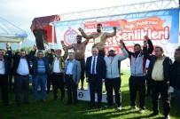 İSMAIL AYDıN - Orhangazi'de Yağlı Güreş Şenliği