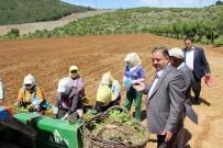 CENNET - Baştuğ'dan Çiftçiler Günü Mesajı