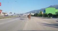 İpini Koparan Başıboş At Trafiği Tehlikeye Soktu