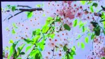 İMAM HATİP ORTAOKULLARI - '3. İyilik Okulu Ödülleri' Sahiplerini Buldu