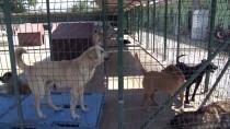 SOKAK HAYVANI - '500 Köpeğin Telef Edildiği İddiası Asılsızdır'