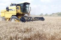 REKOR - Antalya'da ANTBRİLİK Buğday Alım Fiyatını Açıkladı