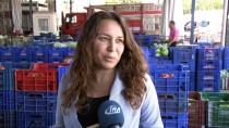 İHRACAT - Antalya Halinde Ramazan Zammı Yok