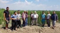 MECIDIYEKÖY - Osmaniye'de Dolu Çiftçileri Vurdu