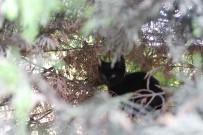 OSMANGAZI BELEDIYESI - (Özel) Yavru Kediyi Ölümden Muhabirin İhbarı Kurtardı