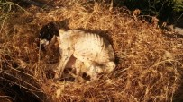 AV KÖPEĞİ - Terk Edilen Köpek Açlıktan Ölmekten Kurtarıldı