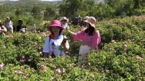 YABANCI TURİST - Yabancı Turistlerin Yeni Gözdesi Açıklaması Isparta Gül Bahçeleri