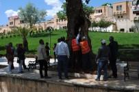 RESTORASYON - Asırlık Ağaçlara Özel Bakım