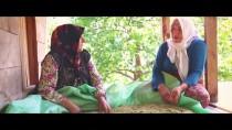 GIRESUN ÜNIVERSITESI - Kanserde Erken Teşhisin Önemi 'Kuşdili' İle Vurgulandı