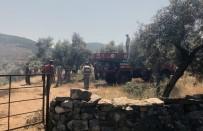 ZEYTINLIK - Milas'ta Zeytinlik Yangını